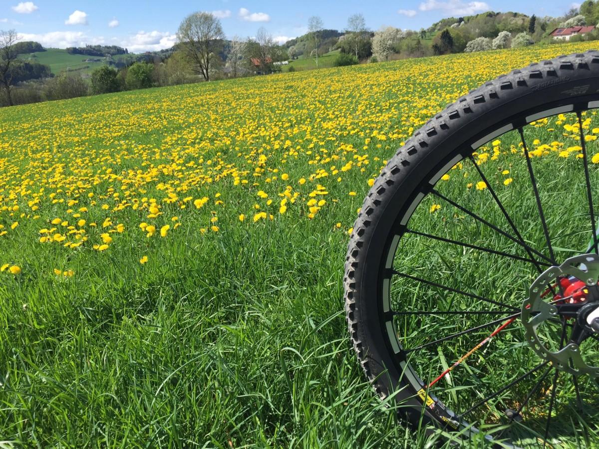 Mountainbike Stammtisch: Jeden Freitag 17:00 Uhr