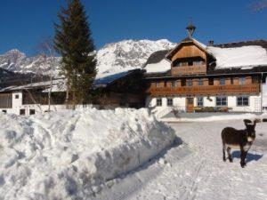tritscherhof-winter